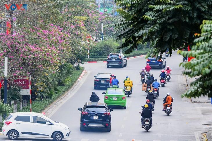 Bunga Ban Bermekaran Lebih Dini di Kota Ha Noi - ảnh 15