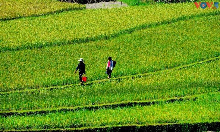 Keindahan Hoi An dan Sa Pa, Dua Destinasi yang Paling Fotogenik di Vietnam - ảnh 14