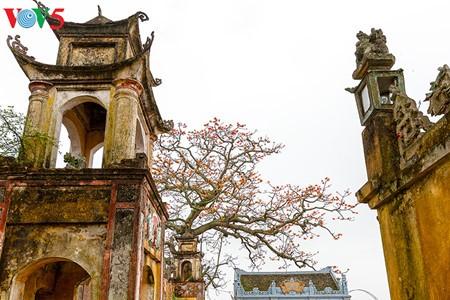 越南北部乡村鲜艳夺目的红色木棉花 - ảnh 10