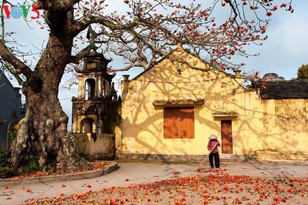 越南北部乡村鲜艳夺目的红色木棉花 - ảnh 8