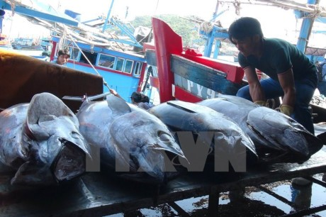 越南和中国推动北部湾渔业可持续发展 - ảnh 1