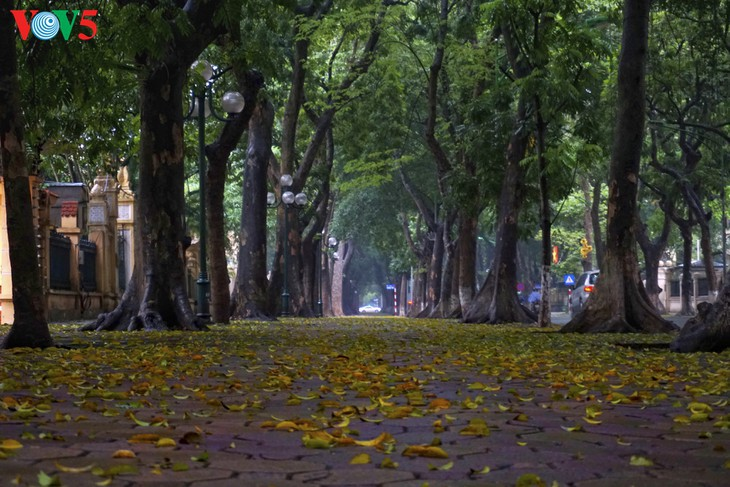社区隔离期间河内的美 - ảnh 1
