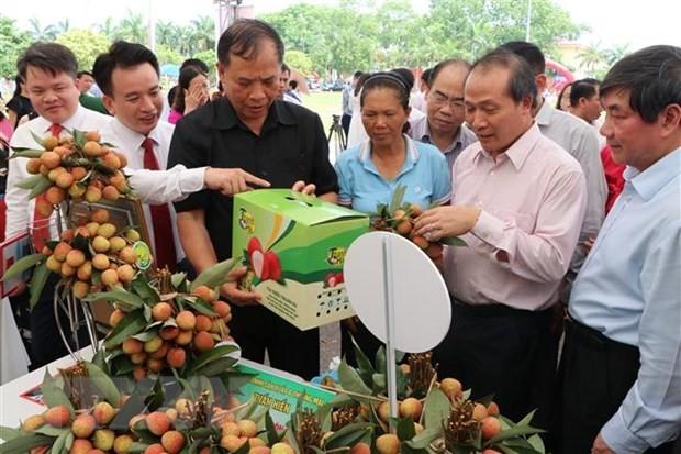 海阳省扩大达到国际标准的荔枝和龙眼专产区 - ảnh 1