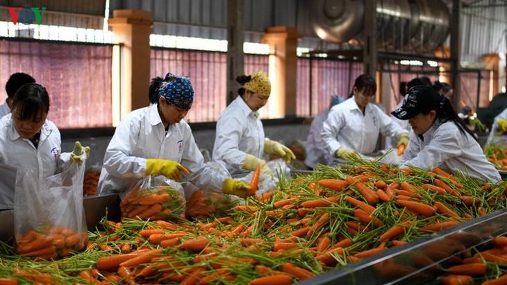 农业部门及时提供信息 密切关注农产品出口市场 - ảnh 2
