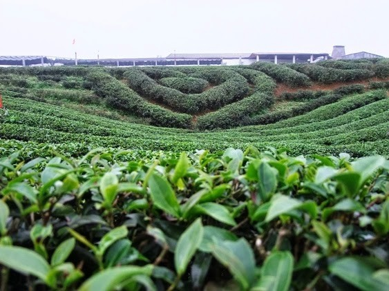 避暑胜地木州 - ảnh 1