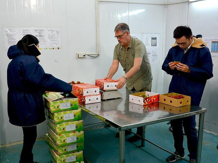 美国水果出口检疫专家将于9月2日抵达越南进行水果检疫 - ảnh 1