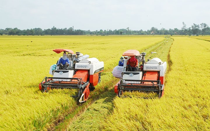 九龙江平原大米逐步肯定了越南大米品牌在市场上的地位 - ảnh 1