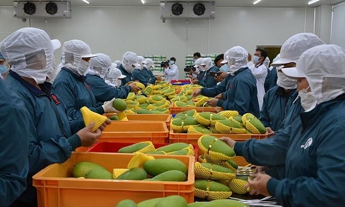 对多个主要市场的水果和蔬菜出口增长强劲 - ảnh 1