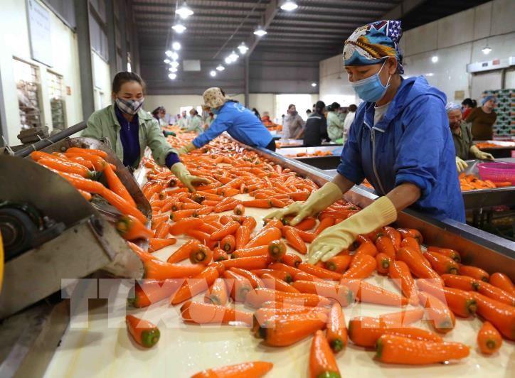 加强向澳大利亚推介越南加工农产品 - ảnh 1
