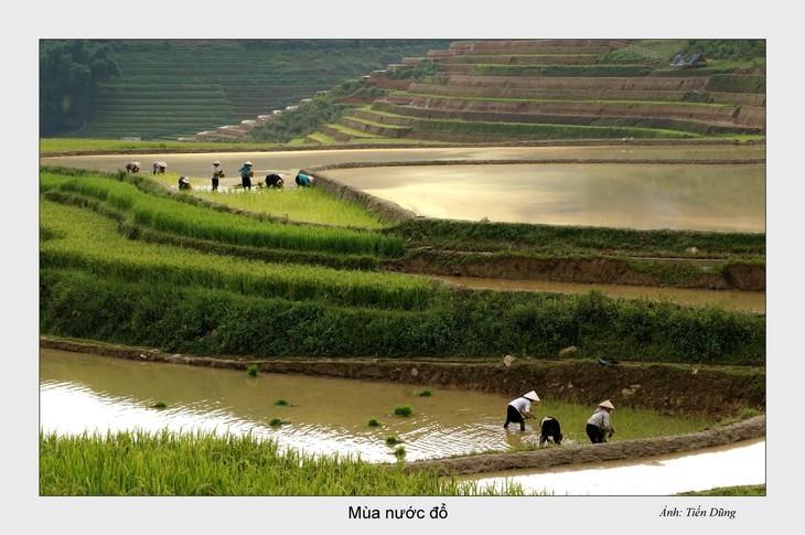 西北灌水季节之美 - ảnh 4
