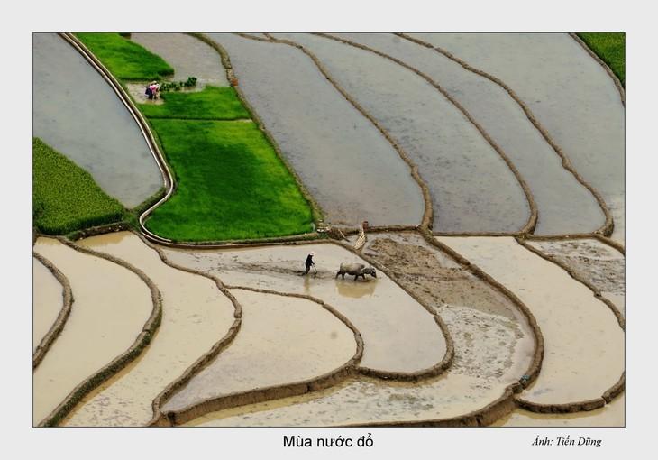 西北灌水季节之美 - ảnh 5