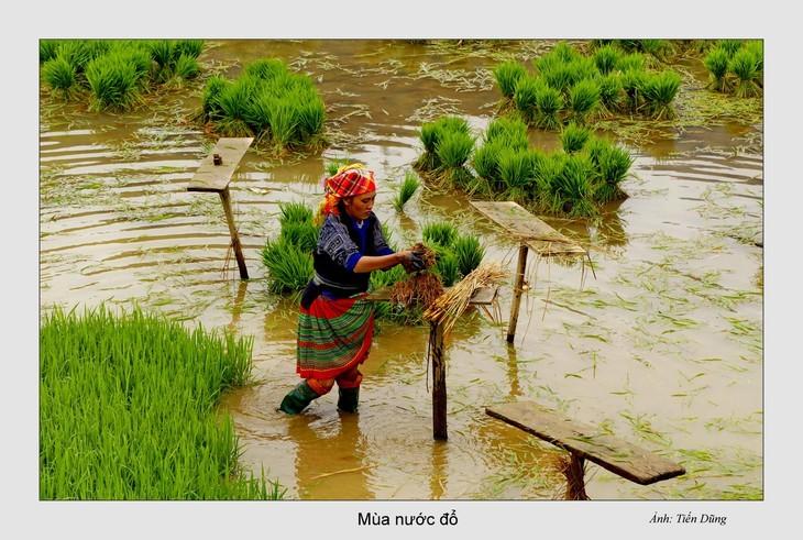 西北灌水季节之美 - ảnh 8