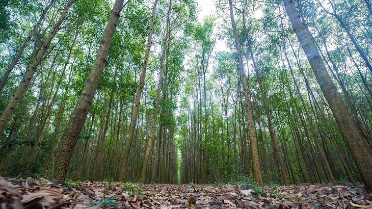 Forest protection and afforestation - ảnh 1