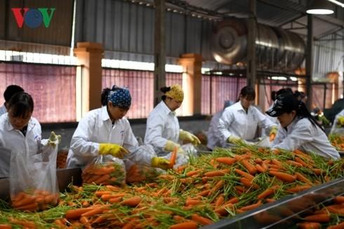 Boosting links – key to increasing Vietnam's farm produce exports  - ảnh 2