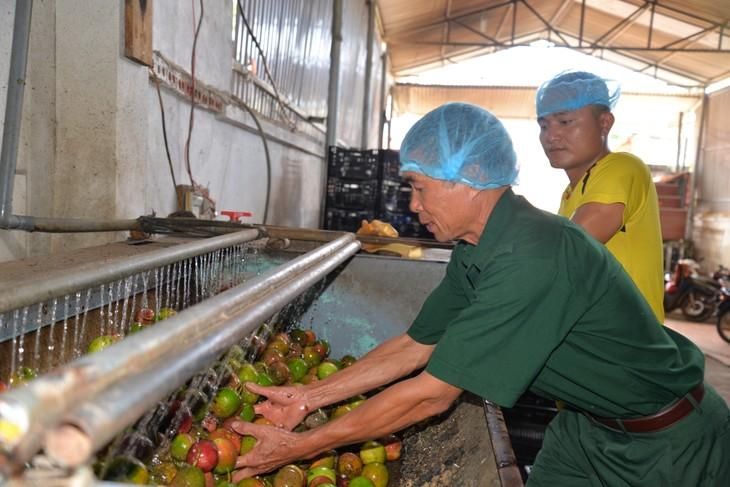 War invalids contribute to Son La province's agricultural, rural economic restructuring - ảnh 1