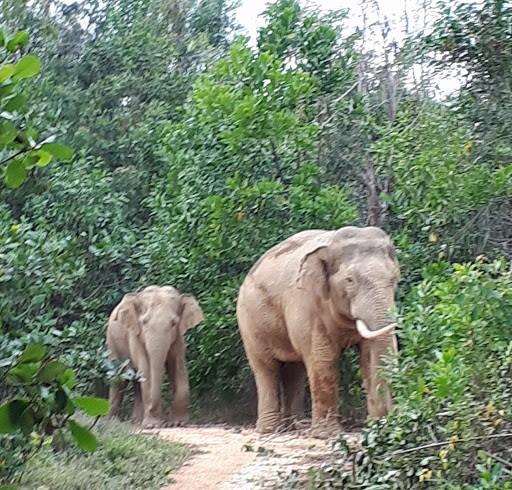 Vietnam protects elephants - ảnh 1