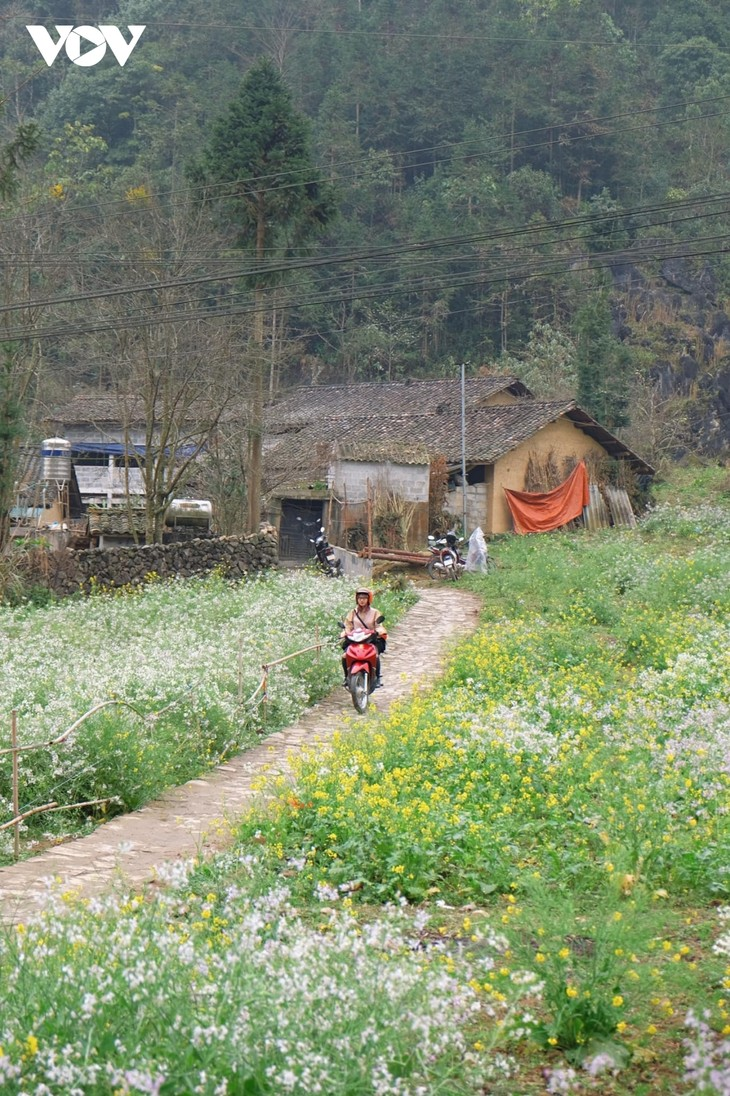 Stunning beauty of Ha Giang province - ảnh 10