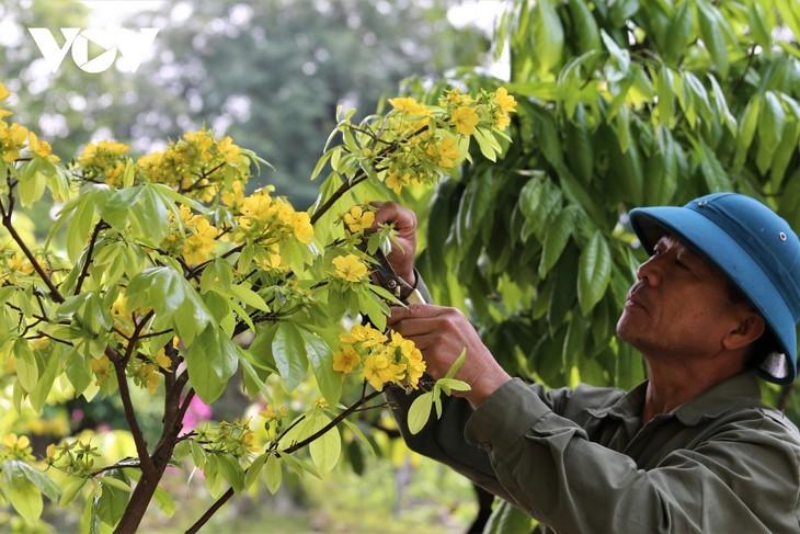 Yellow apricot blossoms in sacred Yen Tu mountain - ảnh 4