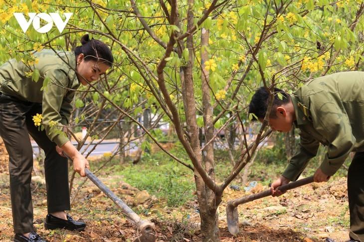 Yellow apricot blossoms in sacred Yen Tu mountain - ảnh 6