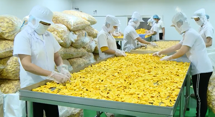 Mekong Delta provinces boost branding of OCOP products - ảnh 3