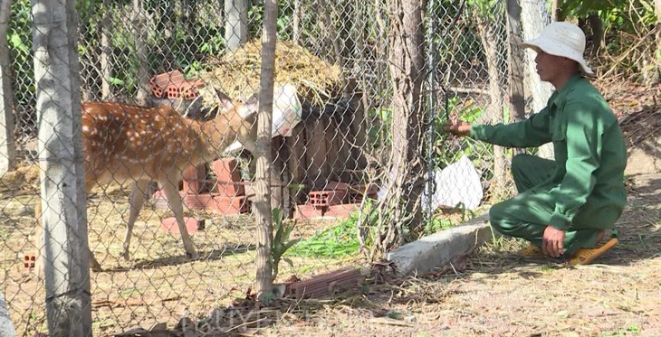Spotted deer farming lucrative in Gia Lai province - ảnh 1
