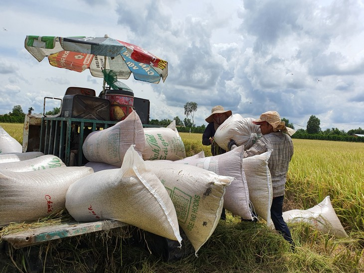 Mekong Delta farmers get bumper winter-spring crop - ảnh 1