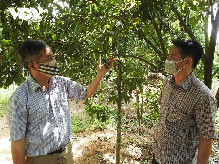 Cooperatives in Kon Tum weather COVID-19 impacts - ảnh 2