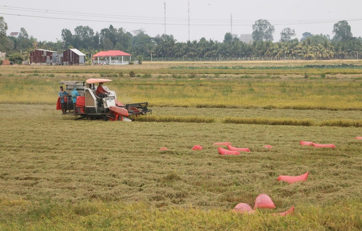 Farmers, enterprises in An Giang province connected for rice sales - ảnh 1