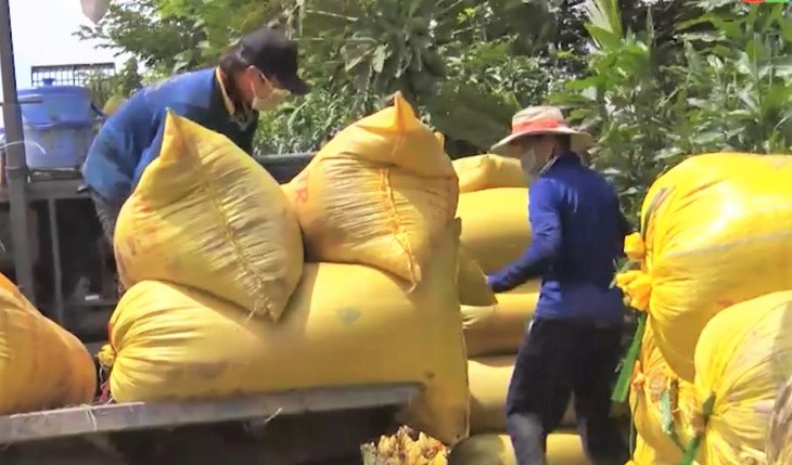 Farmers, enterprises in An Giang province connected for rice sales - ảnh 2