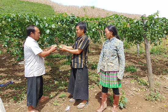 Life improved in Phieng Cai hamlet, Son La province - ảnh 1