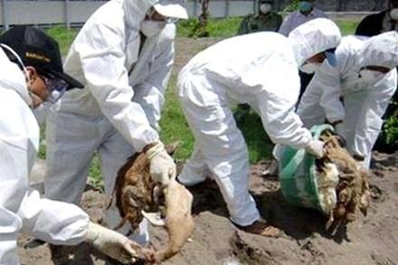 Le Vietnam à la prévention de la grippe A/H5N1 - ảnh 1