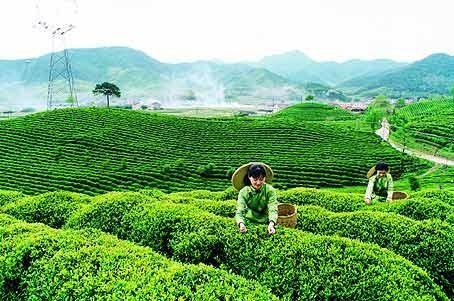 Festival international du thé de Thai Nguyen - ảnh 1