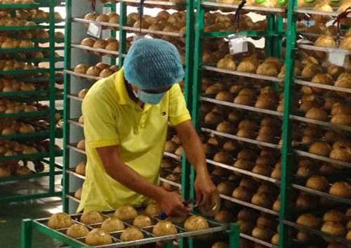 Vers une bonne commercialisation des produits agricoles vietnamiens   - ảnh 1