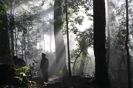 L'hommage au génie de la forêt - ảnh 3