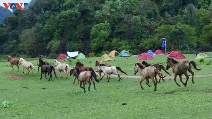 Dông Lâm – une destination idéale pour faire du camping - ảnh 10