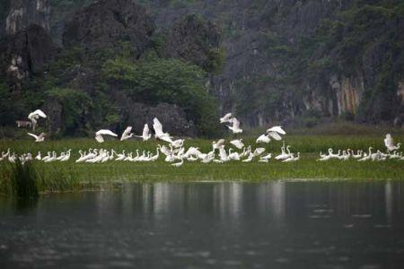 """Vietnam menyambut """"Hari tanah kegenangan air dunia 2013"""" - ảnh 1"""