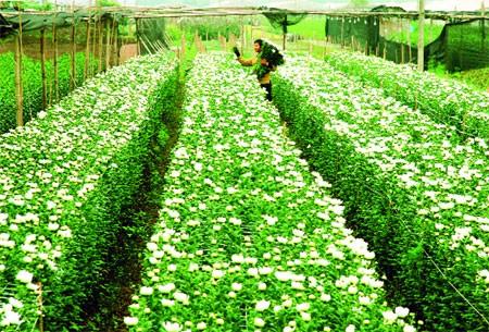 Memobilisasi sumber daya, mengembangkan demokrasi untuk membangun pedesaan baru di Hanoi - ảnh 1