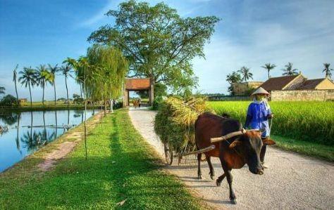 Memobilisasi sumber daya, mengembangkan demokrasi untuk membangun pedesaan baru di Hanoi - ảnh 2