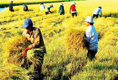 Pertanian Vietnam: Integrasi, tantangan dan kesempatan baru - ảnh 1