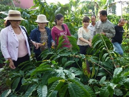 Pengalaman mengerahkan tenaga rakyat dalam pembangunan pedesaan baru di provinsi Dac Lac - ảnh 2