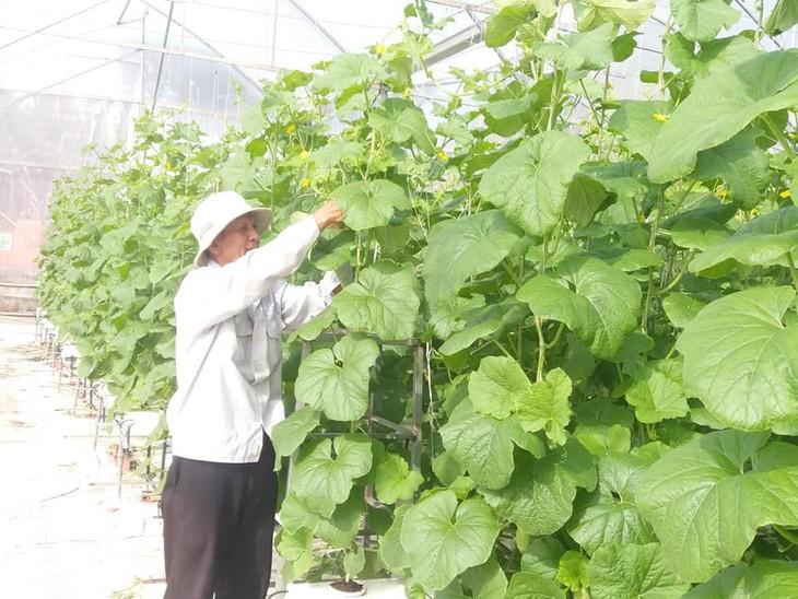Delta del río Mekong realiza reestructuración agrícola frente a la salinización - ảnh 3