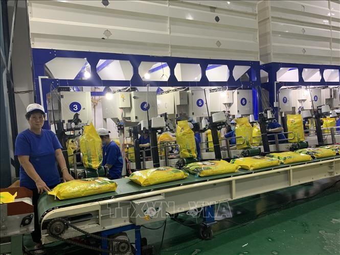 Vietnam por garantizar normas sobre la certificación de arroz aromático exportable a la UE - ảnh 1
