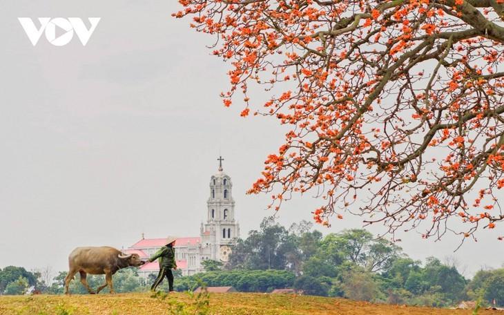 El árbol de algodón de seda roja a la orilla del río Thuong, fuente de inspiración de artistas - ảnh 5