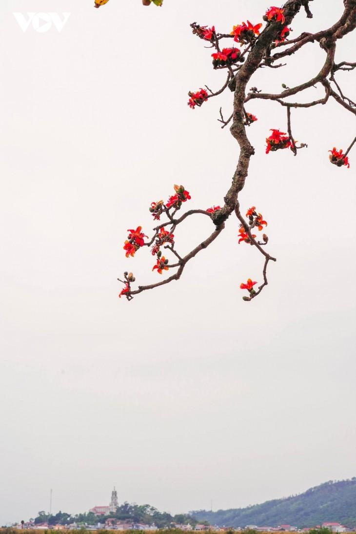 El árbol de algodón de seda roja a la orilla del río Thuong, fuente de inspiración de artistas - ảnh 8