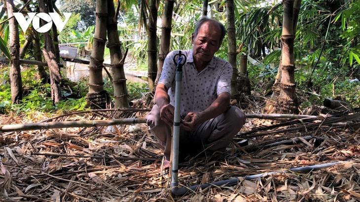Nguyen Trung Duc y sus bambúes cultivados en tierras salinas - ảnh 1