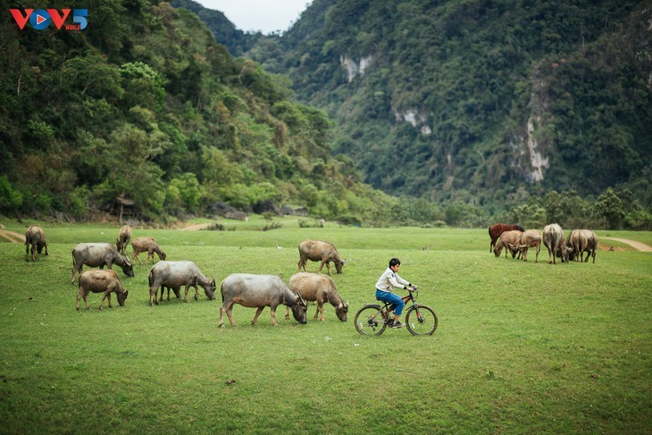 Estepa de Dong Lam: un destino ideal para hacer pícnic - ảnh 15
