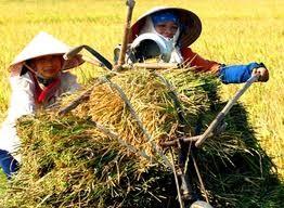 農業省、「農業市場の展望」でシンポ開催 - ảnh 1