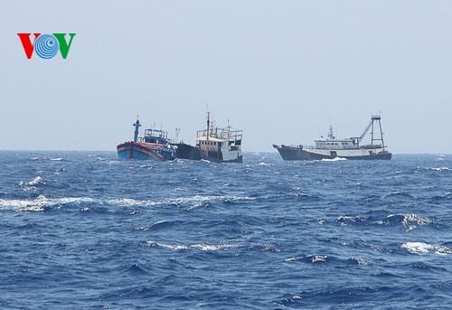 中部漁民、中国の横暴な行為にも屈せず - ảnh 7