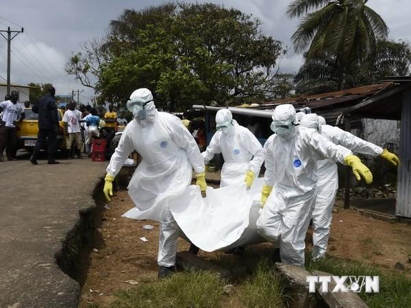 WHO、エボラ熱死者数を発表 - ảnh 1