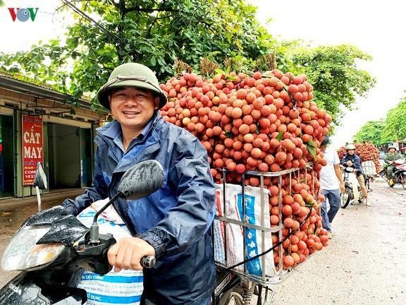 ベトナム産果物の輸出、引き続く増加 - ảnh 1